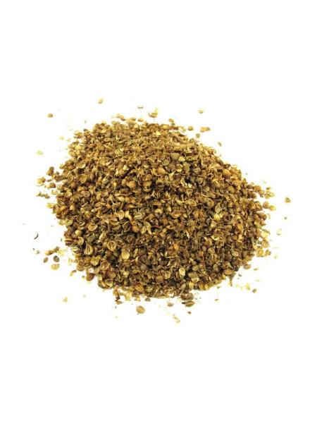 Кориандр, семена